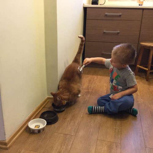czesanie kotów